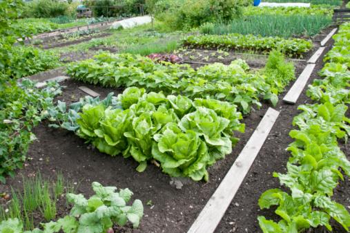 Organic-Gardening-Utah